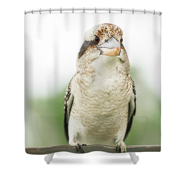 Shower Curtain featuring the photograph Kookaburra Gracefully Resting During The Day. by Rob D Imagery