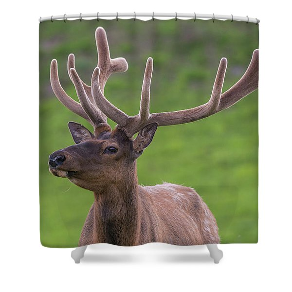 Shower Curtain featuring the photograph ME1 by Joshua Able's Wildlife