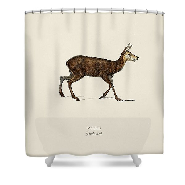 Moschus Illustrated By Charles Dessalines D  Orbigny  1806 1876  Shower Curtain