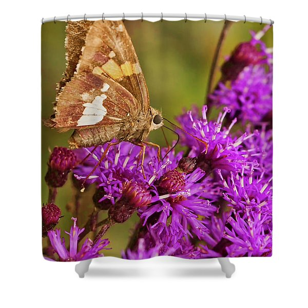 Shower Curtain featuring the photograph Moth On Purple Flowers by Meta Gatschenberger