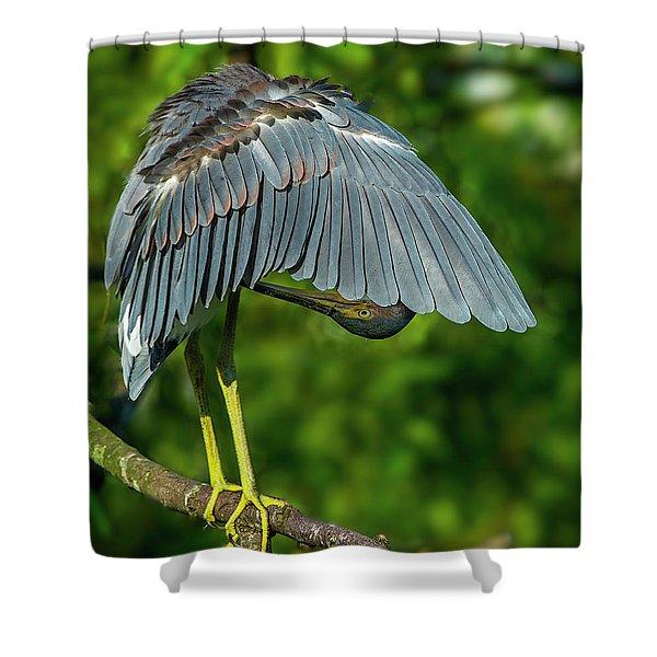 Preening Reddish Heron Shower Curtain