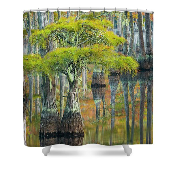Reflection Of Bald Cypress Taxodium Shower Curtain