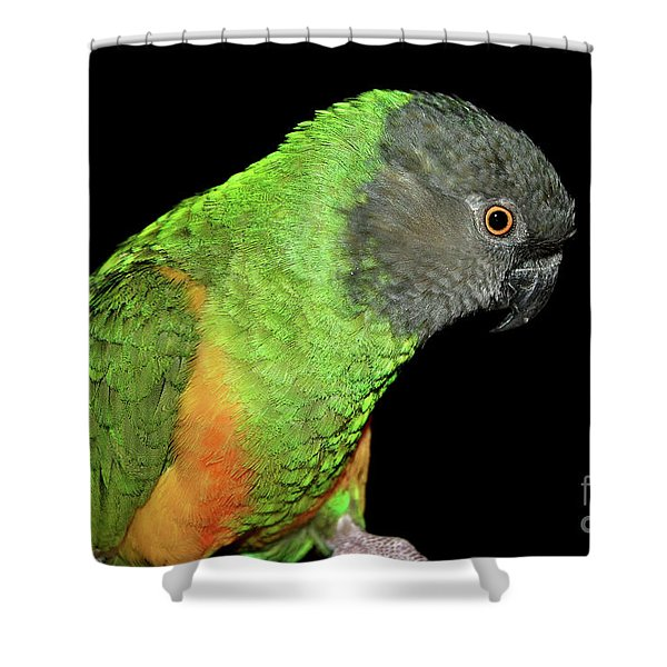 Senegal Parrot Shower Curtain
