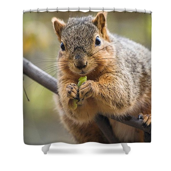 Snacking Squirrel Shower Curtain