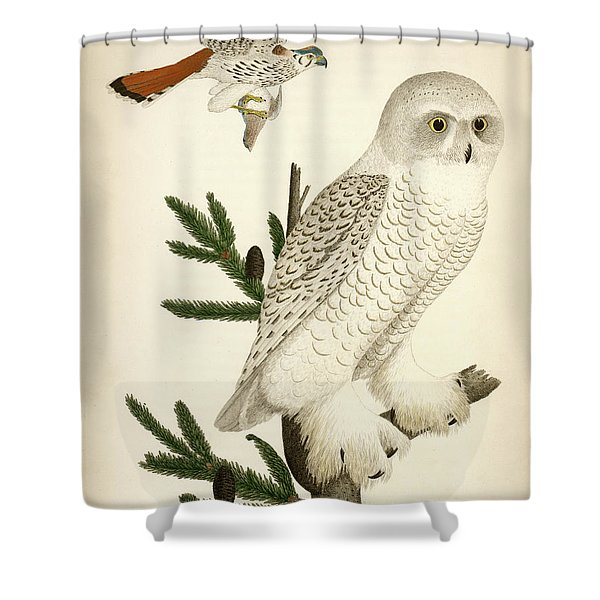 1. Snow Owl. 2. Male Sparrow-hawk. Shower Curtain