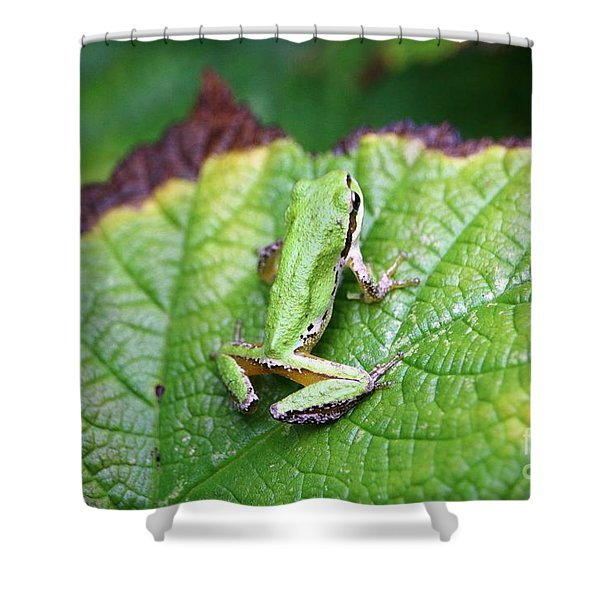 Tree Frog On Leaf Shower Curtain