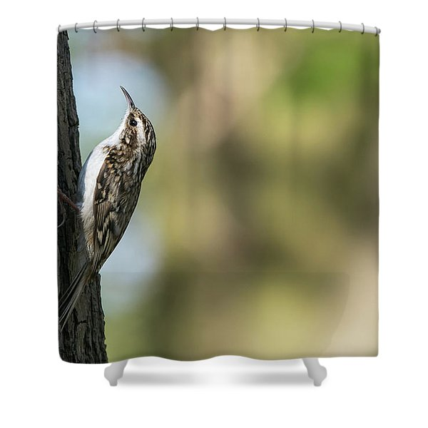 Treecreeper Shower Curtain
