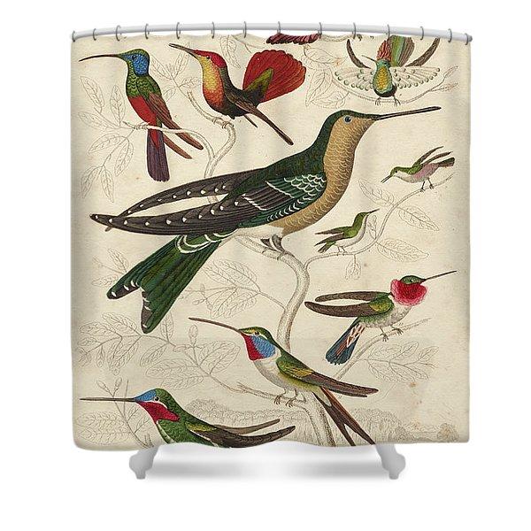 Trochilus, Hummingbirds Shower Curtain