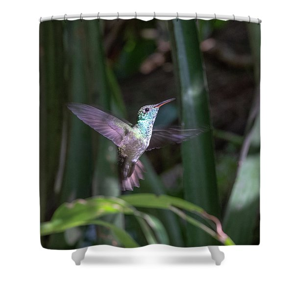 Versicolored Emerald Hummingbird Hovers Shower Curtain
