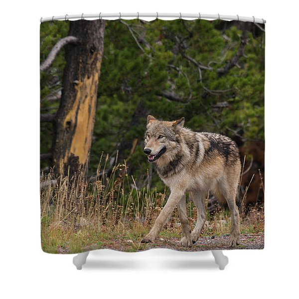 Shower Curtain featuring the photograph W1 by Joshua Able's Wildlife