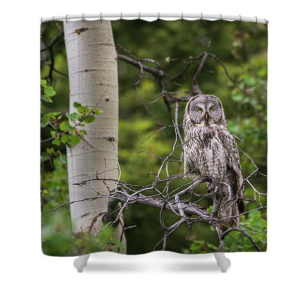 Shower Curtain featuring the photograph B14 by Joshua Able's Wildlife