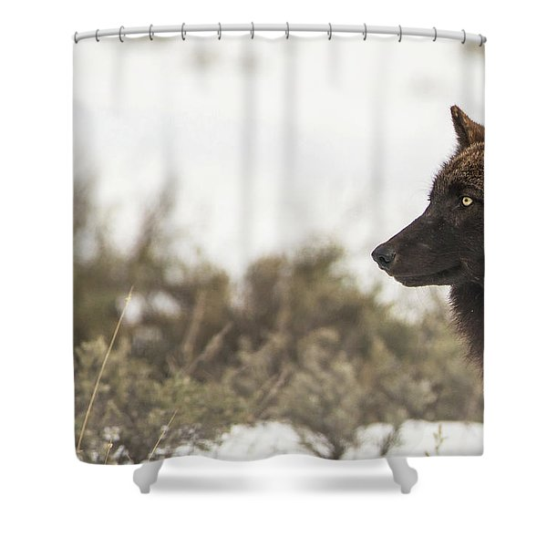Shower Curtain featuring the photograph W15 by Joshua Able's Wildlife