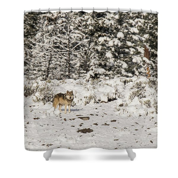 Shower Curtain featuring the photograph W20 by Joshua Able's Wildlife