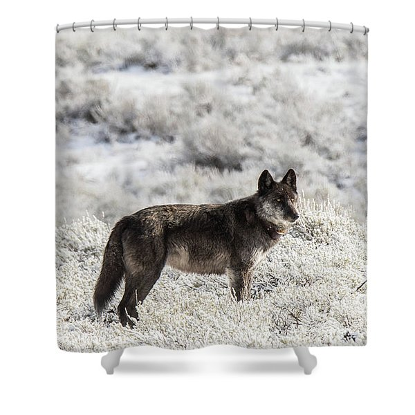Shower Curtain featuring the photograph W23 by Joshua Able's Wildlife