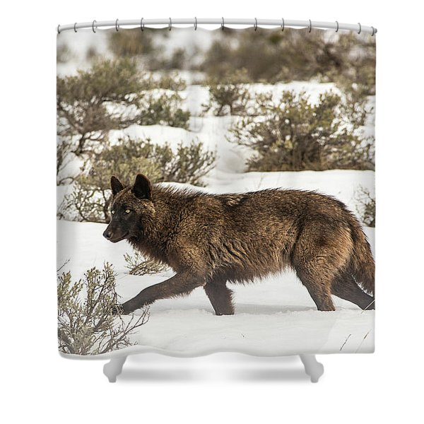 Shower Curtain featuring the photograph W4 by Joshua Able's Wildlife