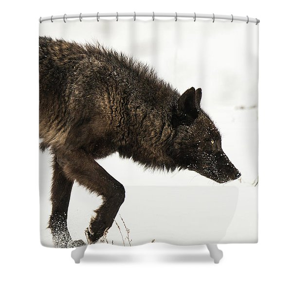 Shower Curtain featuring the photograph W46 by Joshua Able's Wildlife