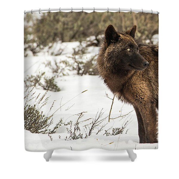Shower Curtain featuring the photograph W6 by Joshua Able's Wildlife