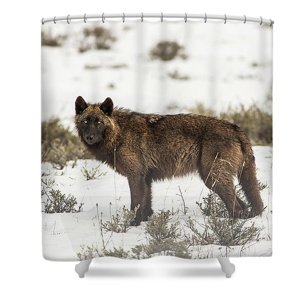 Shower Curtain featuring the photograph W8 by Joshua Able's Wildlife