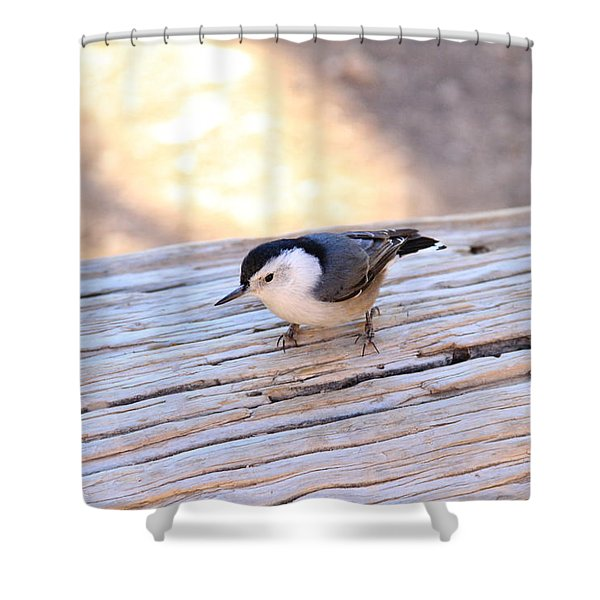 White Breasted Nuthatch Shower Curtain