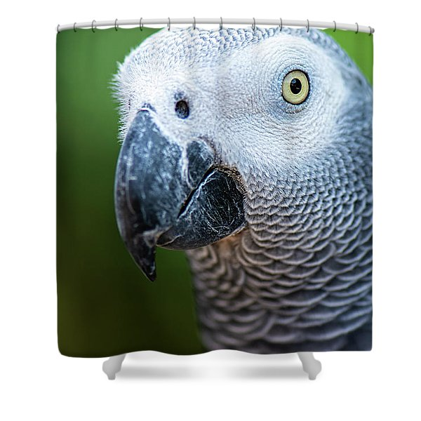Shower Curtain featuring the photograph African Grey Parrot by Rob D Imagery