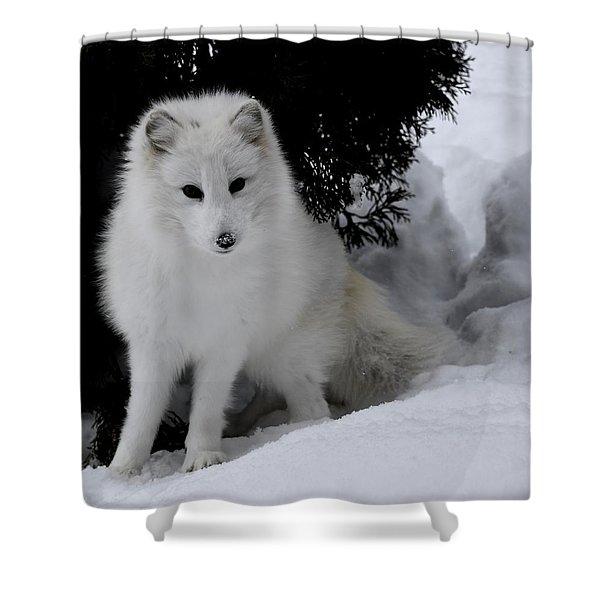 Artic Fox Shower Curtain