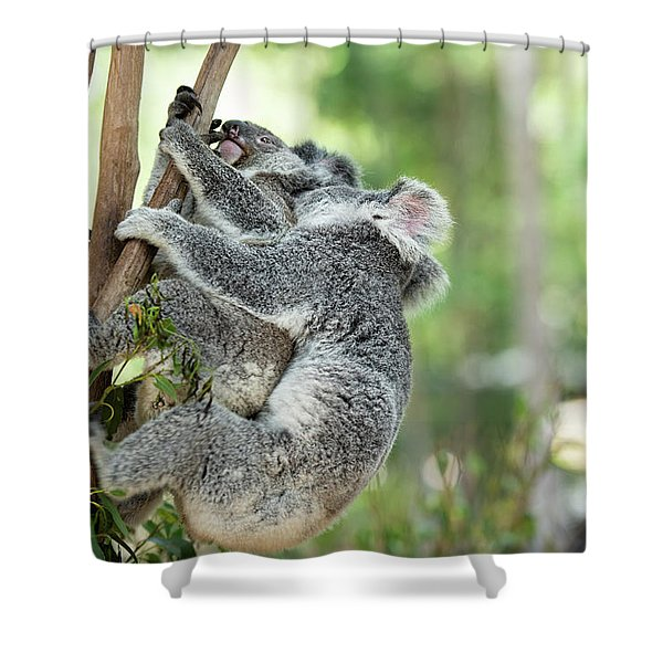 Shower Curtain featuring the photograph Australian Koalas by Rob D Imagery