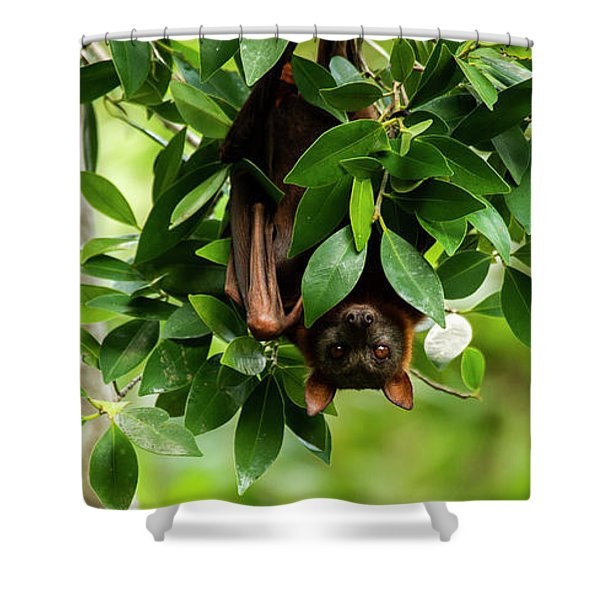 Shower Curtain featuring the photograph Flying Fox Bat by Rob D Imagery