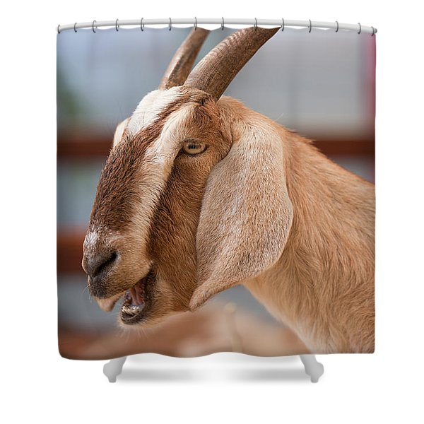 Shower Curtain featuring the photograph Goat by Rob D Imagery