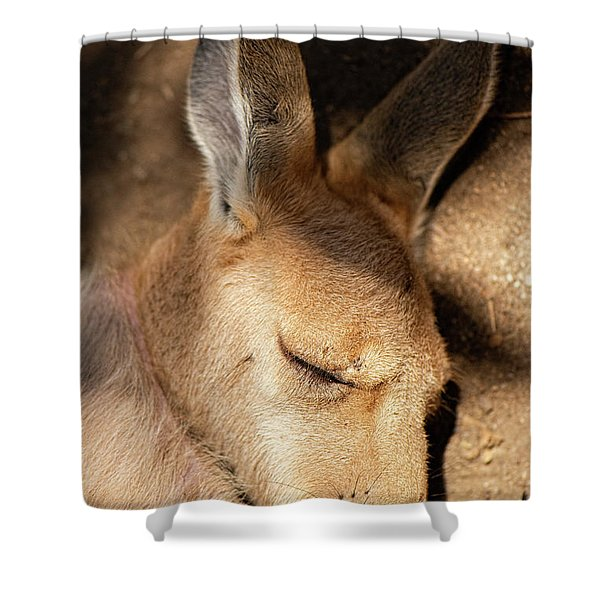 Shower Curtain featuring the photograph Kangaroo Joey by Rob D Imagery