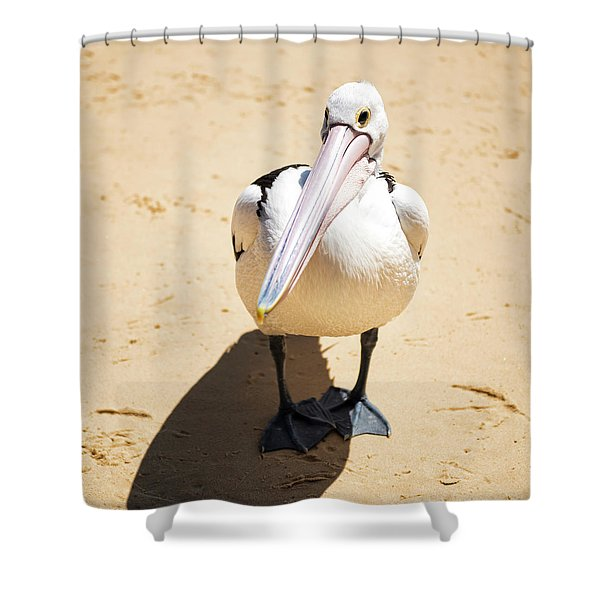 Shower Curtain featuring the photograph Pelican During The Day by Rob D Imagery