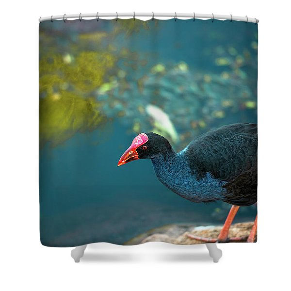 Shower Curtain featuring the photograph Purple Swamphen by Rob D Imagery