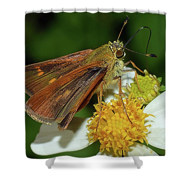 Skipper Butterfly Shower Curtain