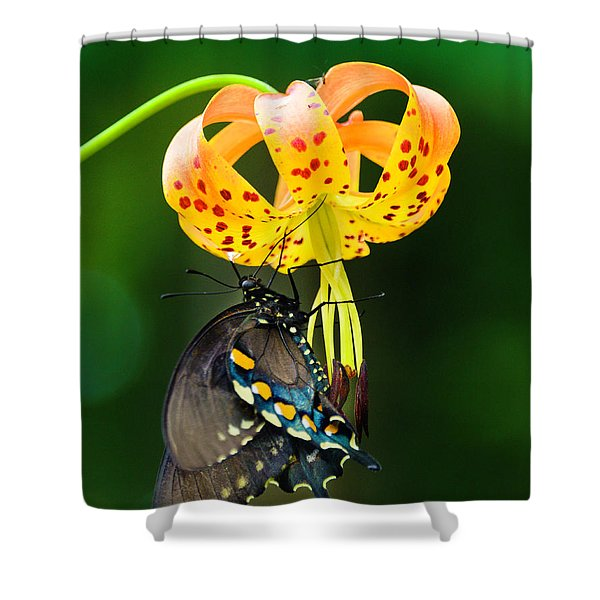 Swallowtail On Turks Cap Shower Curtain