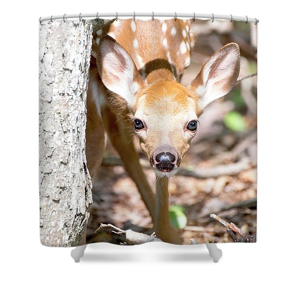 White-tailed Deer Fawn, Animal Portrait Shower Curtain