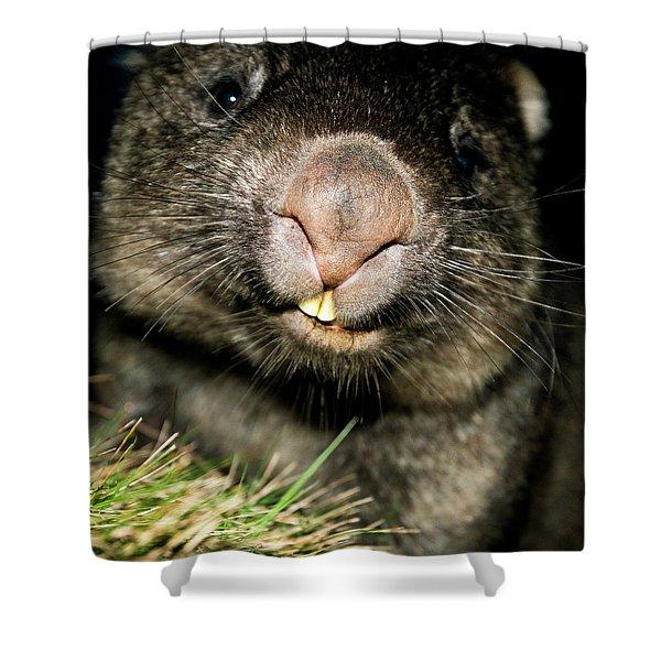 Wombat At Night Shower Curtain