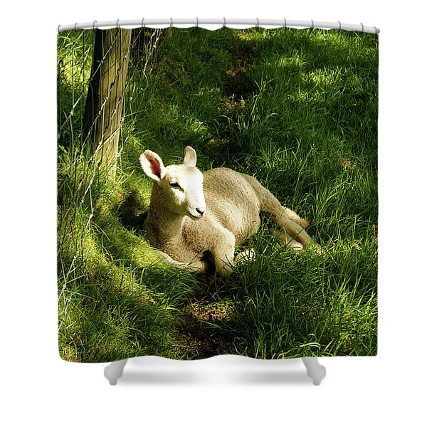 20/06/14  Keswick. Lamb In The Woods. Shower Curtain