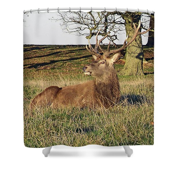 28/11/18  Tatton Park. Stag In The Park. Shower Curtain