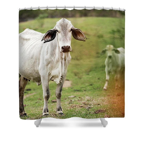 Shower Curtain featuring the photograph Australian Cow by Rob D Imagery