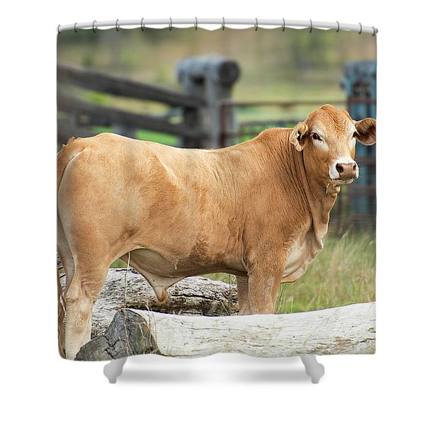 Shower Curtain featuring the photograph Bull In The Country Side. by Rob D Imagery