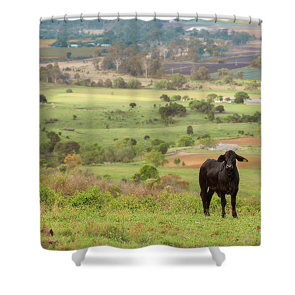 Shower Curtain featuring the photograph Cow Outside In The Paddock by Rob D Imagery