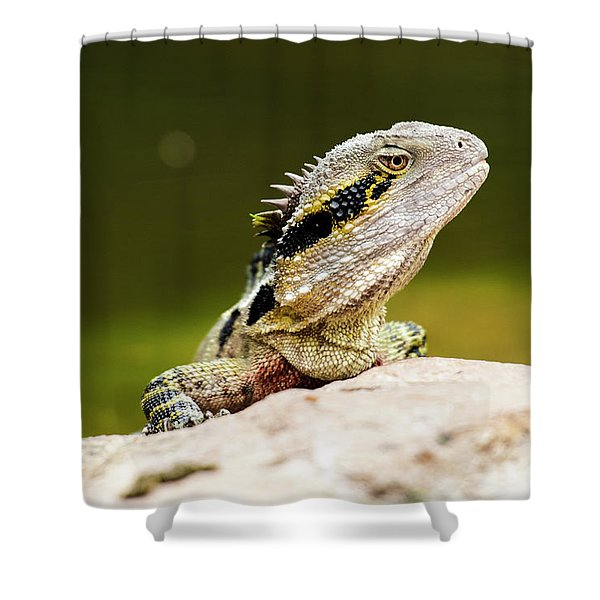 Shower Curtain featuring the photograph Eastern Water Dragon Lizard by Rob D Imagery