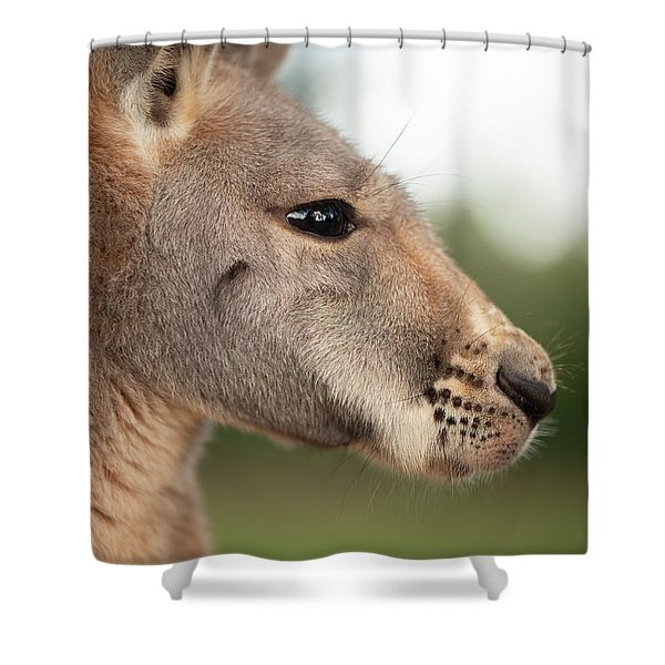 Shower Curtain featuring the photograph Kangaroo Outside During The Day Time. by Rob D Imagery