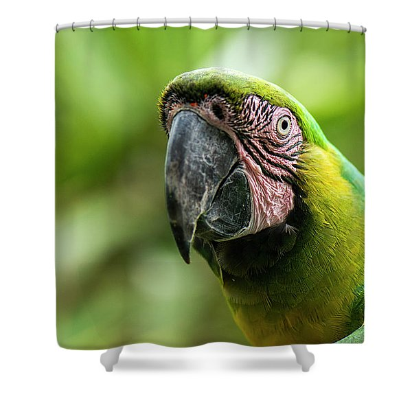 Shower Curtain featuring the photograph Beautiful Macaw Bird by Rob D Imagery