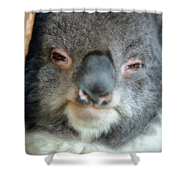 Shower Curtain featuring the photograph Cute Australian Koala Resting During The Day. by Rob D Imagery