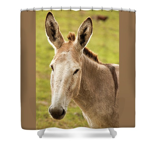 Shower Curtain featuring the photograph Donkey Out In Nature by Rob D Imagery