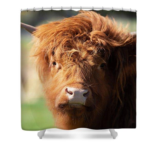 Highland Cow On The Farm Shower Curtain