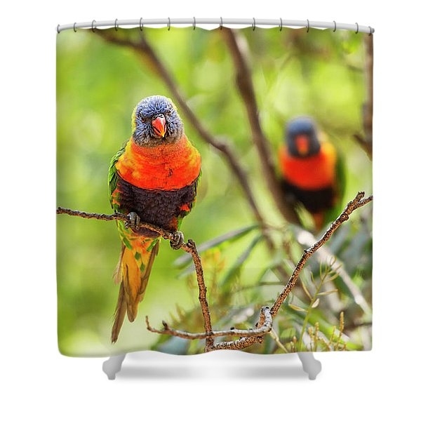 Shower Curtain featuring the photograph Rainbow Lorikeets by Rob D Imagery