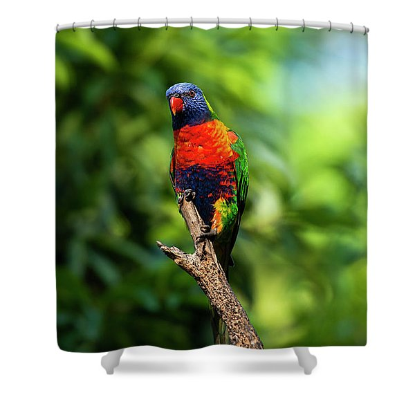 Shower Curtain featuring the photograph Rainbow Lorikeet by Rob D Imagery