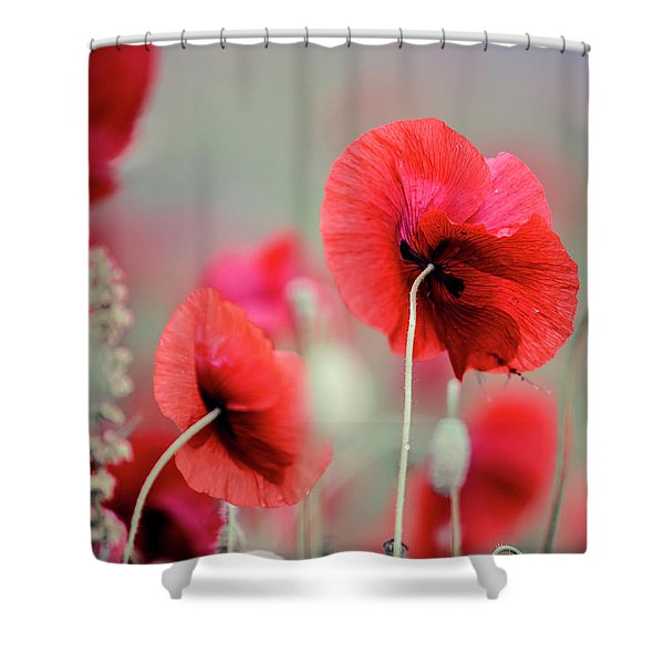 Red Corn Poppy Flowers Shower Curtain