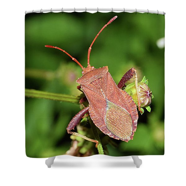 Leaf Footed Bug Shower Curtain